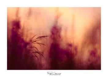 Late summer by FreyaPhotos