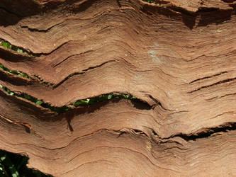 Texture- Dry Bark by AilinStock