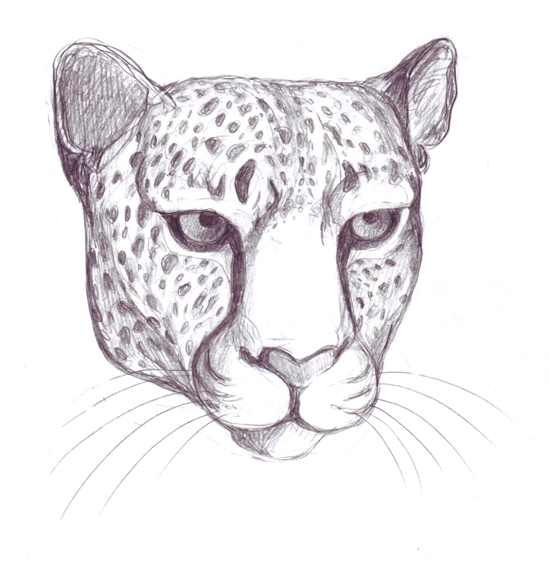Leopard Pencil Drawings Pencil Drawing of a Leopard s