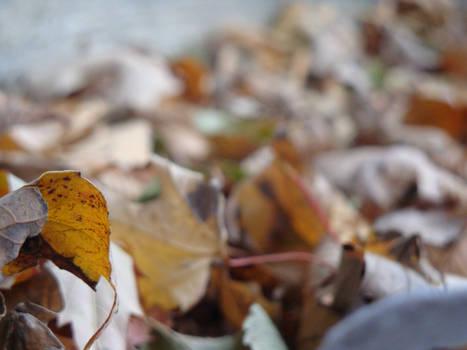 Fall Reprise