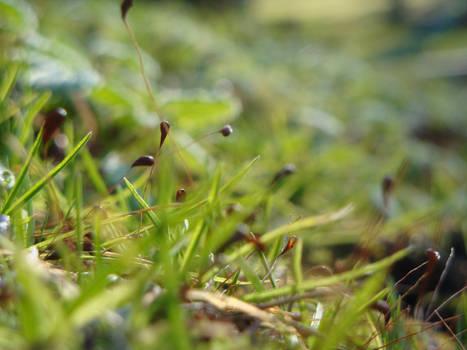 Moss v1