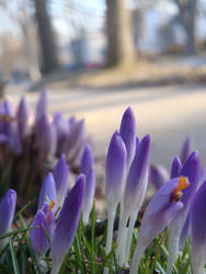 Spring 2013 (C'est arrive)