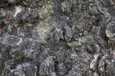 Ceiteach Bark Texture 037 by ceiteach