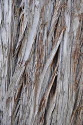 Ceiteach Bark Texture 038 by ceiteach