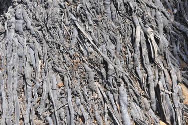 Ceiteach Bark Texture 040