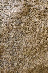Ceiteach texture 081711a by ceiteach