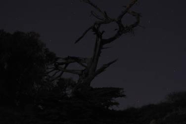 The Spooky Tree by ceiteach