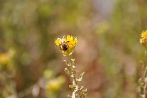 Bee across the way