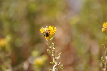 Bee across the way by ceiteach