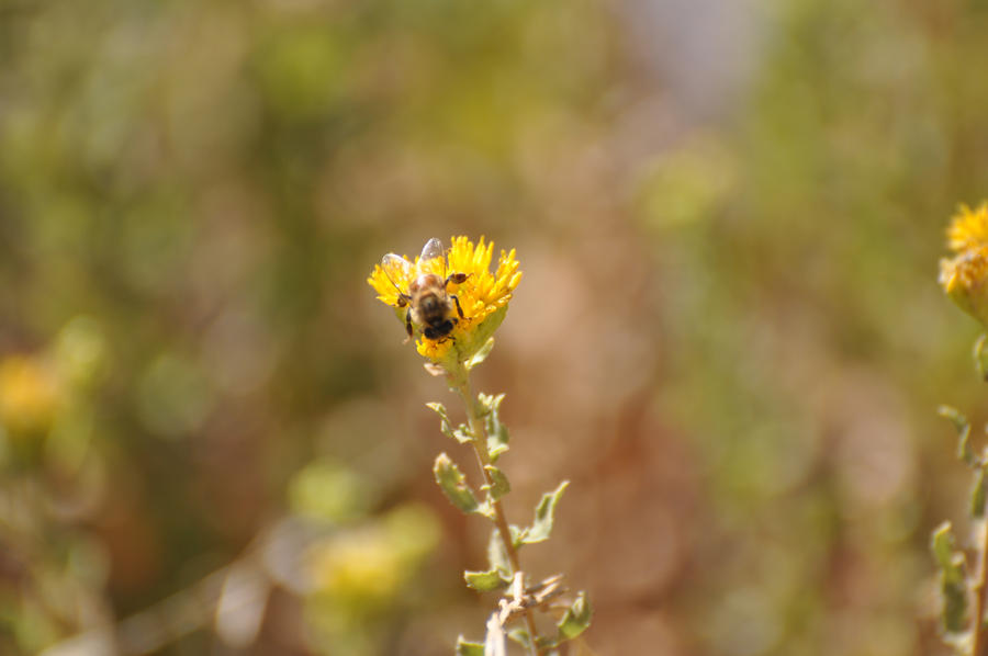 Bee across the way by ceiteach