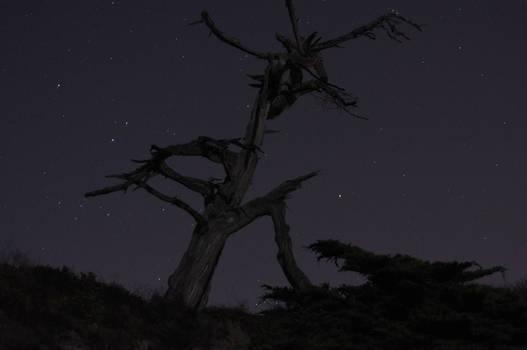 Spooky Tree No. 3