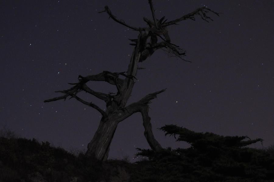Spooky Tree No. 3 by ceiteach