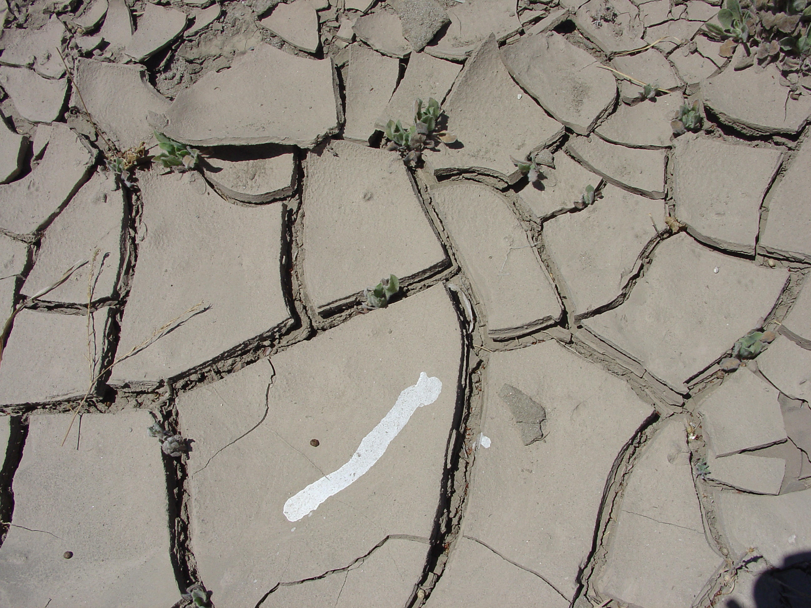 Ceiteach cracked earth 004 by ceiteach