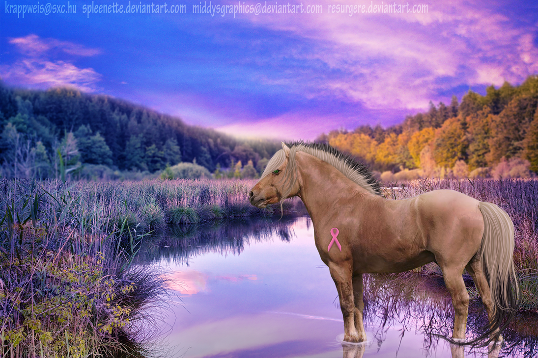Tranquil Peace by MiddysGraphics