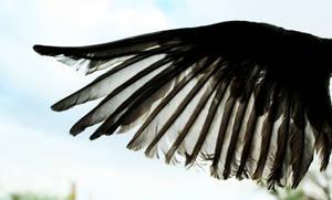Open Bird Wing
