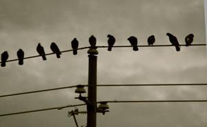 Birds on a Wire by DawnAllynnStock