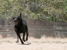 Angry Dog by DawnAllynnStock