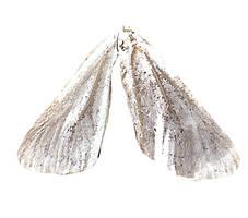 Taupe Wings by DawnAllynnStock