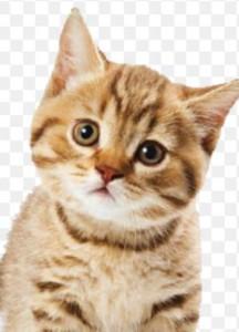 catmeow356's Profile Picture