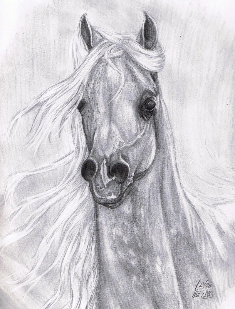 Arabian Horse for Candyheartz by stargate4ever23 on DeviantArt