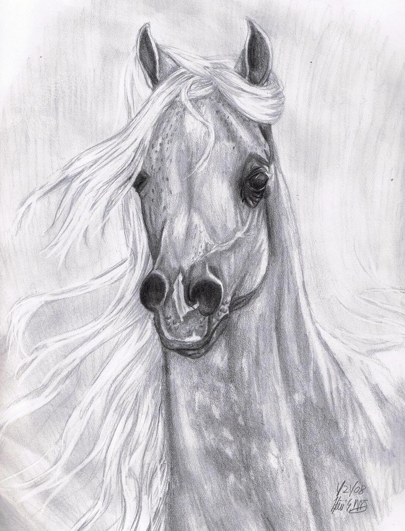 Arabian Horse for Candyheartz by stargate4ever23 on DeviantArt