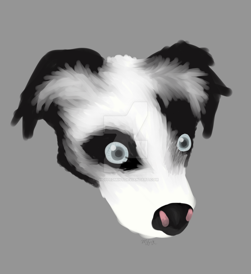 the_sheep_dog_by_choppedmint-dcsiphf.png