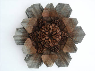 Fleur au Chocolat by brdparker
