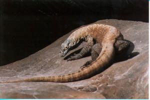 dragonlizard89's Profile Picture