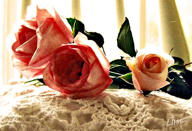 Grandma's Roses by happytimer
