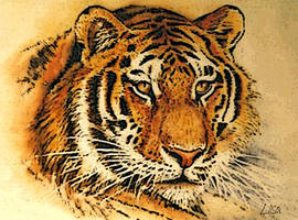 Portrait of a Tiger by happytimer