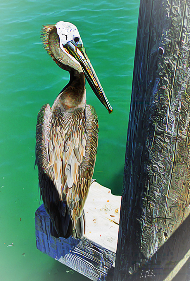 Wise Old Pelican by happytimer