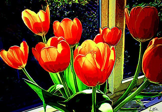 Tulips on my Window by happytimer