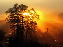 Sunrise in the Morningfog by happytimer