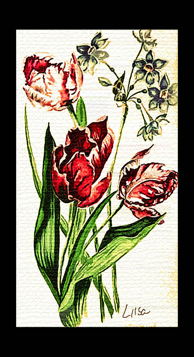 PRETTY TULIPS FOR YOU!