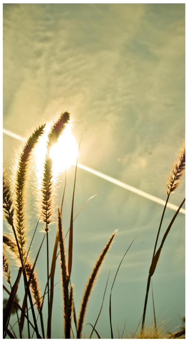 Golden by Dani-Sunshine
