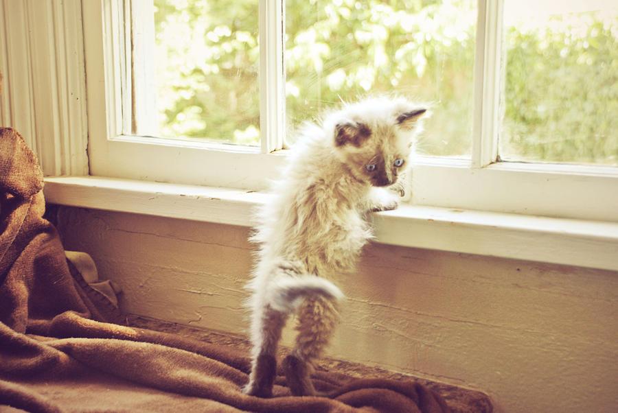 Kitten by Dani-Sunshine