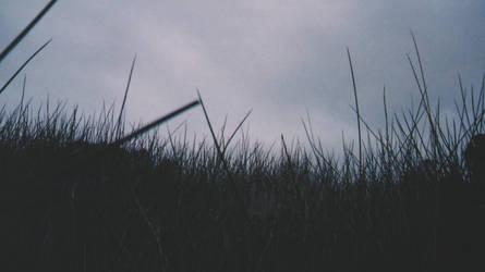 Below the Reeds