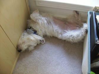 I LIKE Sleeping This Way by silvercollaredwolf