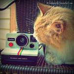 Polaroid love.