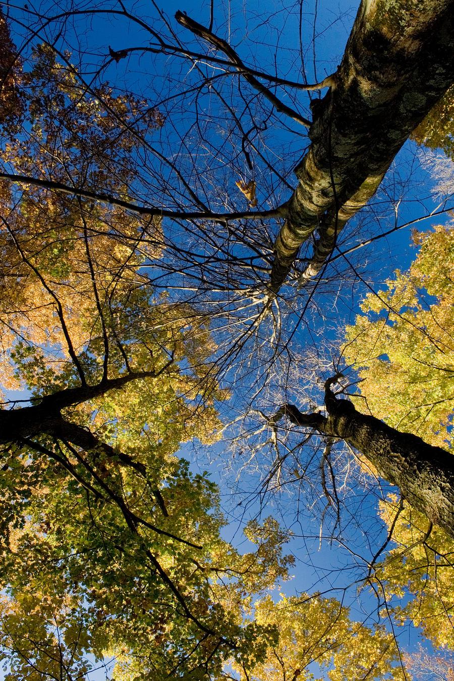 Autumn VI by Logicalx
