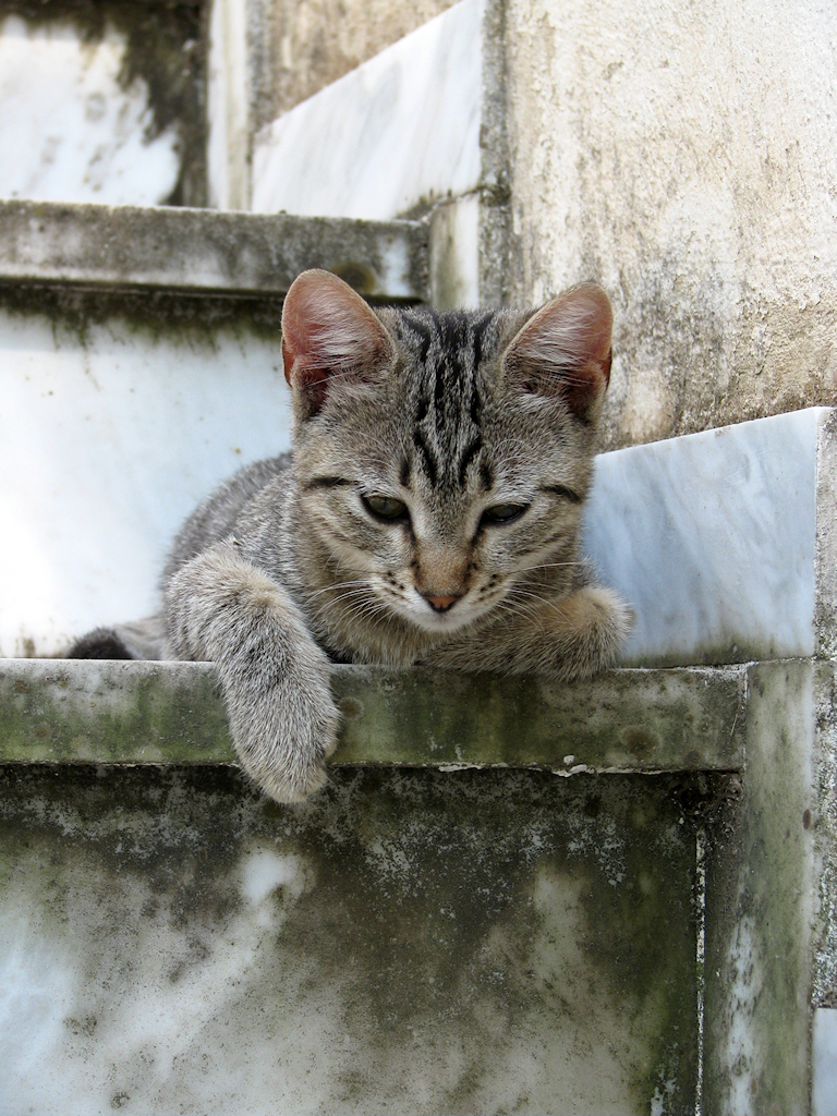 Relaxed kitten - 3