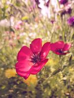 Flower by VortexFI