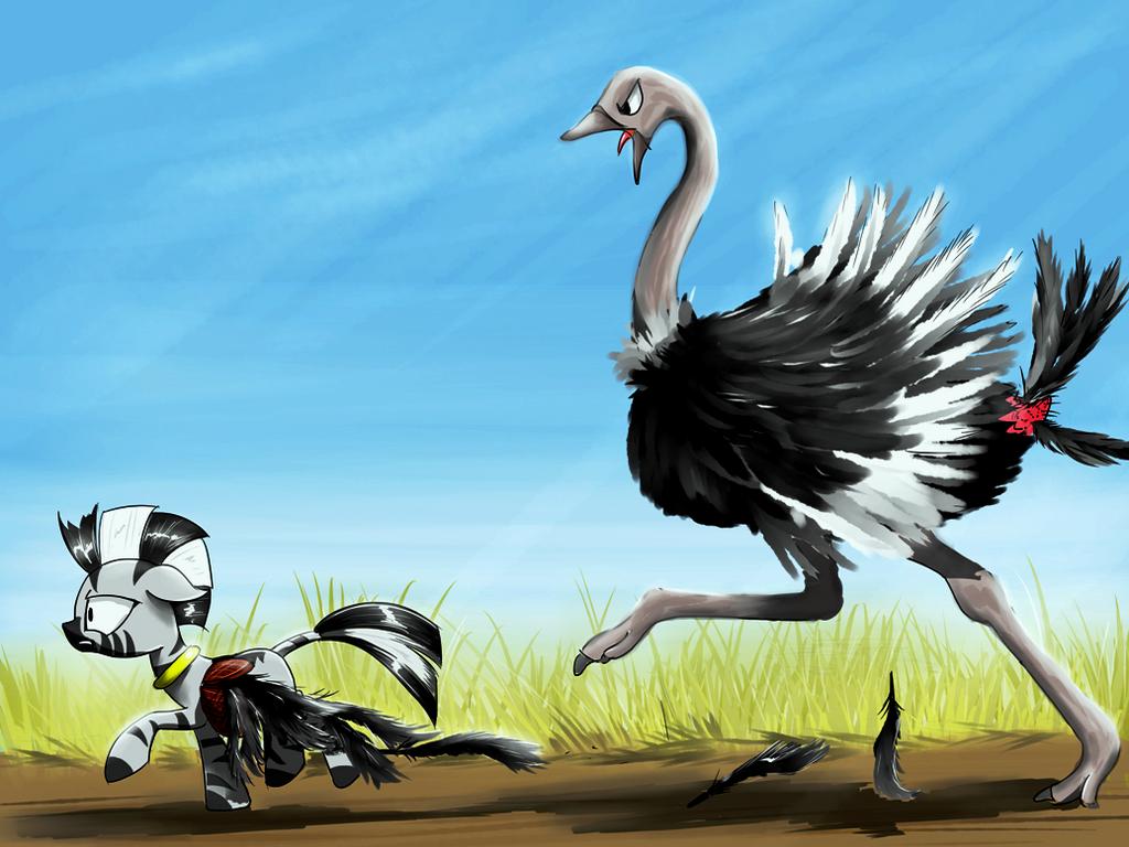 Run, Zecora, run by MadHotaru