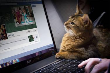 Facebook Kitty