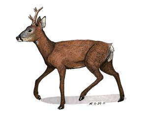 Roe Deer by MsMergus
