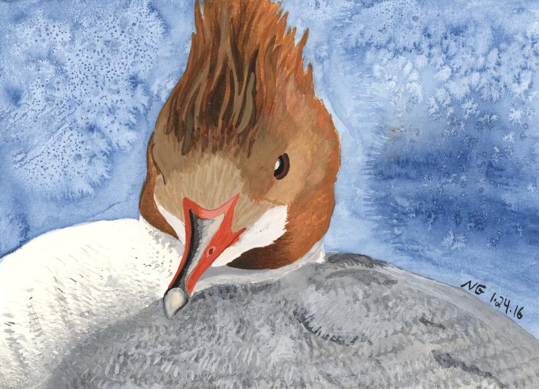 Merganser Hen Portrait by SlateGray