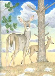 Hilltop Deer