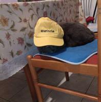Engineer cat