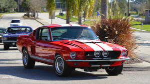 Her Stang