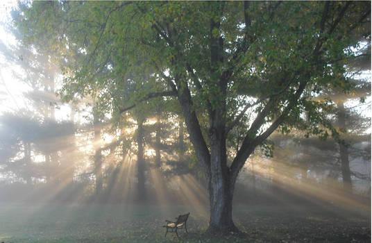 mornin' fog